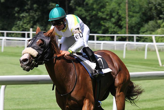 horse racing, virtual team build